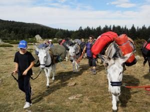 ânes dans les Pyrénées - AltiPyr